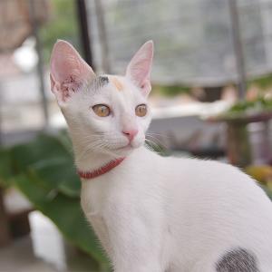 White Kitty Free stock image | coreldrawdesign