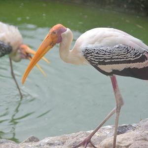 Painted stork, portrait, Free 4K Stock Images,