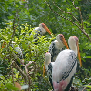 Painted storks on the branch, Free Stock Images