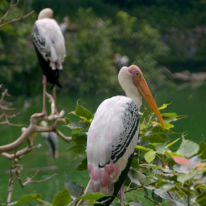 Stork, wild photography, free 4K stock images
