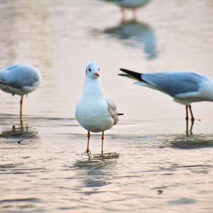 Beautiful White Seagull Bird Royalty Free Stock Image