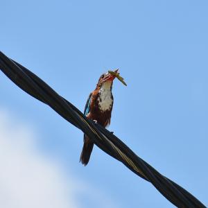 Bird Eating Grasshopper 4K Stock Image